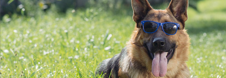 Scoop-It Pet Waste Removal LLC